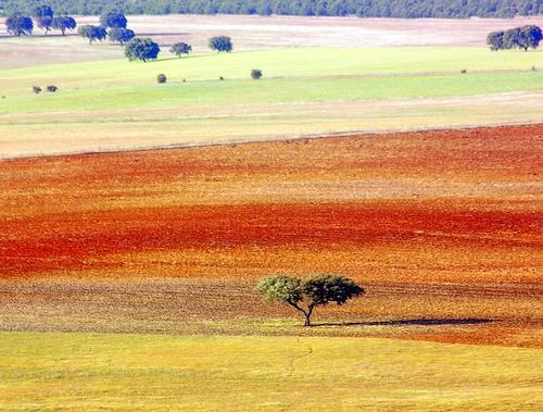 stripes-of-colors-by-luisa-m-c-m-cruz