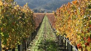 Vineyard-cropped